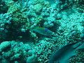 Port Ghalib march 2006-0099.jpg