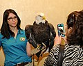 Posing for picture with Bald Eagle. (10596598203).jpg