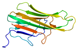 Protein CD40LG PDB 1aly.png