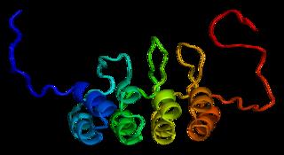 p16 mammalian protein found in Homo sapiens