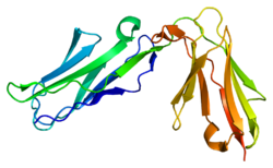 Protein NCR1 PDB 1oll.png