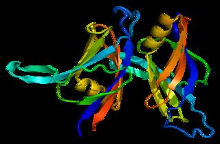 PRKCD protein-coding gene in the species Homo sapiens