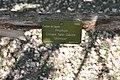 Prunus Sato-Zakura 'Shirotae' in the Jardin des Plantes, Paris 006.JPG