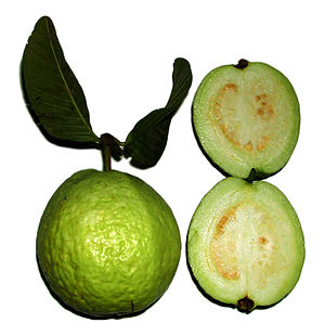 Green apple guavas are less rich in antioxidants