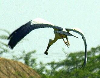 Pulicat Lake - Image: Pulicat Bird Sanctuary