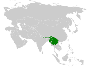 Striated bulbul - Image: Pycnonotus striatus distribution map