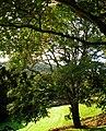 Quantock Hills - panoramio.jpg