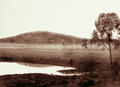 Queensland State Archives 2315 Lagoon and grazing land at Jimbour Station Darling Downs 1897.png