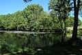 Réserve naturelle régionale des étangs de Bonnelles le 26 mai 2017 - 08.jpg