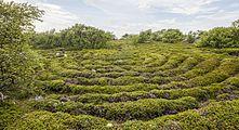 RUS-2016-Bolshoi Zayatsky Island-Stone labyrinth 03.jpg