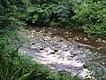 Rapids on the River Allen - geograph.org.uk - 926502.jpg