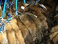 Raw sable pelts at Kopenhagen Fur (2).jpg