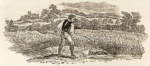 Akenfield - Peter Hall's film Akenfield made use of a scene depicted in Thomas Bewick's 1797 A History of British Birds: a reaper finds he has just killed a partridge sitting on her nest.