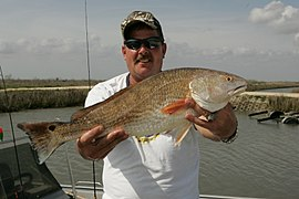 Red Drum Fish.jpg
