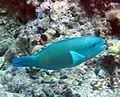 Reef0620 - Flickr - NOAA Photo Library.jpg