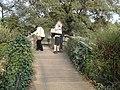 Regent's Park Queen Mary Gardens footbridge.JPG