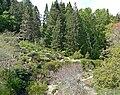 Regional Parks Botanic Garden view.jpg