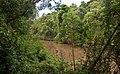 Reserva de la biosfera yaboti, misiones, argentina.jpg