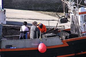 Retour de la pêche à la seiche du fileyeur Jason IV (14).JPG