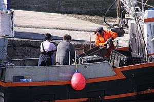 Retour de la pêche à la seiche du fileyeur Jason IV (39).JPG