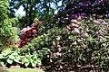 Rhododendronpark Bremen 20090513 010.JPG