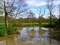 River Arun - geograph.org.uk - 779177.jpg