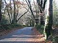 Road through the woods towards Ashcombe Cross - geograph.org.uk - 1591502.jpg