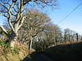 Roadside trees north of Cefn Mine - geograph.org.uk - 670838.jpg