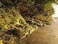 Rocky roadside by the Avon estuary - geograph.org.uk - 1509923.jpg