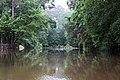 Roman Forest Flood Waters - 4-19-16 (26250051330).jpg