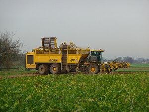Harvest - Sugar beet harvester. Baden-Wurttemberg, Germany.