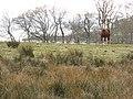 Rough grazing near Gearradh - geograph.org.uk - 443600.jpg