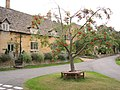 Rowan Tree - geograph.org.uk - 49471.jpg