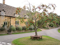 Rowan Tree and Cottages in the centre of Laverton