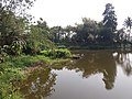 Ruined Nilkuthi and Pond at Manirampur in Hooghly 06.jpg