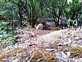 Ruisseau des singes 05.jpg