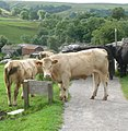 Rush hour in Malham - panoramio.jpg