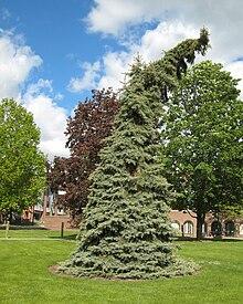 State University of New York at Geneseo - Wikipedia