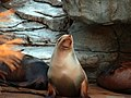Saint Louis Zoo 042.jpg