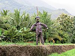 Scarecrow IMG 8678.jpg
