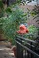 Scarlet Ibises (31791531810).jpg