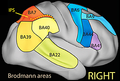 Schematic diagram of Brodmann areas associated with working memory tasks.png