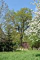 Schleswig-Holstein, Halstenbek, Naturdenkmal 09-02 NIK 3156.JPG