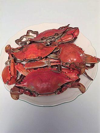 Callinectes sapidus - Cooked blue crabs