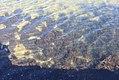 Seaweed narrabeen.jpg