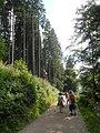 Seerundweg - Titisee - geo.hlipp.de - 40305.jpg