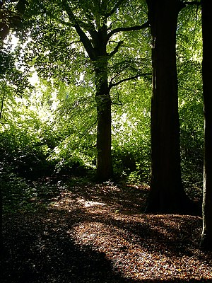 Riis Skov - Typical scenery in the beech forest of Riis Skov.