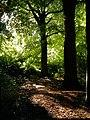 September in Riis Skov.JPG