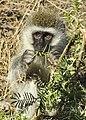 Serengeti safari 131113-N-LE393-251.jpg