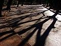 Shadows (744580031).jpg